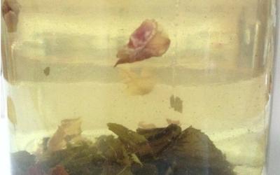 Té verde helado con pétalos de rosas