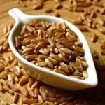 El Kamut, el primo lejano (y más antiguo) del trigo